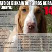 sabueso-espac3b1ol