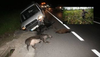 en-la-a-1-con-un-jabali-domingo-noche-asi-son-los-accidentes-causados-por-animales